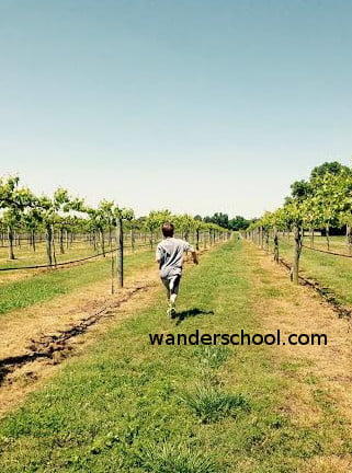 running vineyard
