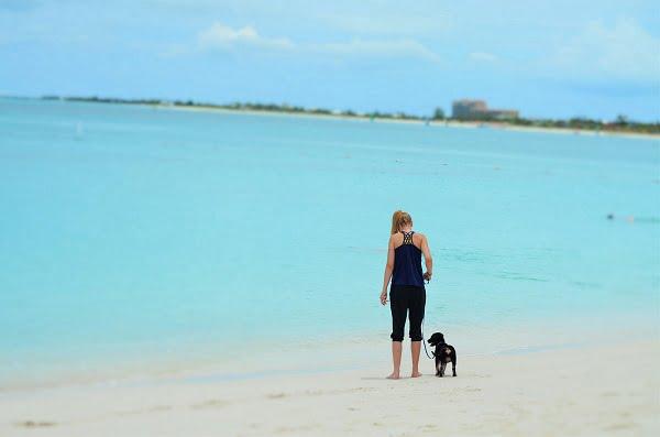 turks and caicos dogs beach