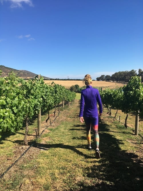 south africa wine vineyard