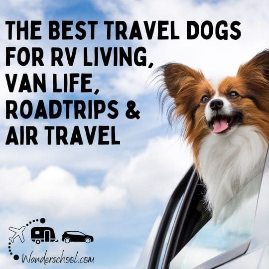 the best travel dogs rv life van life travel lifestyle nomads small dogs